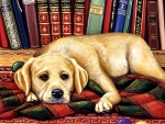 Read to Me - Dog F