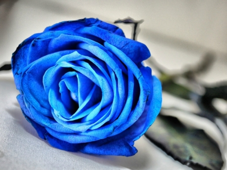 Blue Rose 3d And Cg Abstract Background Wallpapers On