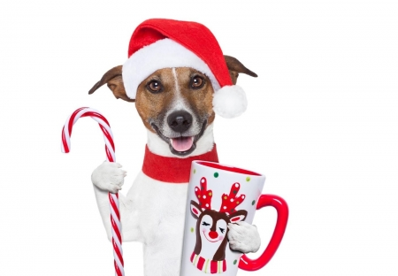 Merry Christmas! - red, candy, craciun, christmas, caine, animal, hat, cute, santa, jack russell terrier, crad, cup, funny, white, dog