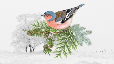Winter Finch - cones, collage, trees, finch, winter, pine, bird, snow, cedar, Firefox Persona theme