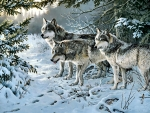 Wolves in Winter F