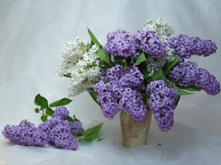 BEAUTIFUL LILAC FLOWERS - BEAUTIFUL, FLOWERS, IMAGE, LILAC