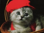 kitten with red hat