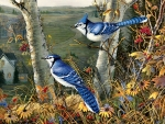 Autumn Blue Jays - Birds F1