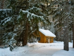 Hut in Winter Forest