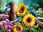 Sunflower Garden - Birds FC