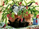 Cactus Kitties - Cats F