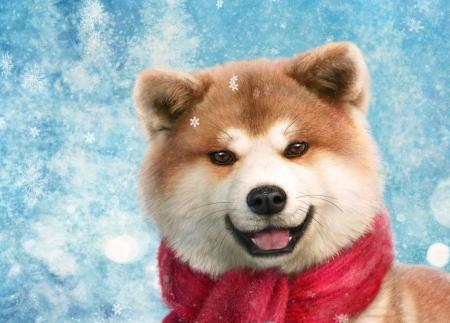 akita ino red chinese dog year alenaekaterinburg luminos caine new