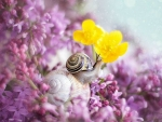 LILACS WITH SNAIL