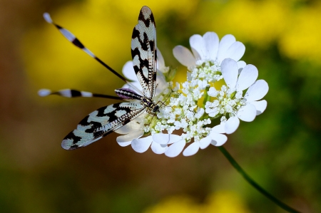 Butterfly - bokeh, butterfly, fluture, flower, insect, black, white