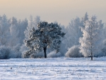 Winter in Latvia