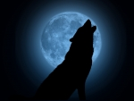 Howling Wolf Blue Moon