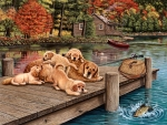 Lazy Day on the Dock - Dogs F