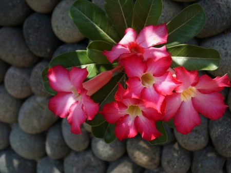 FLOWERS ON STONES - STONES, FLOWERS, IMAGE, ABSTRACT