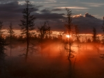 Foggy Woods Sunset