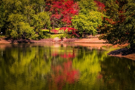 Trees in the Park - lofty, mount, nature, park, reflection, trees, lake
