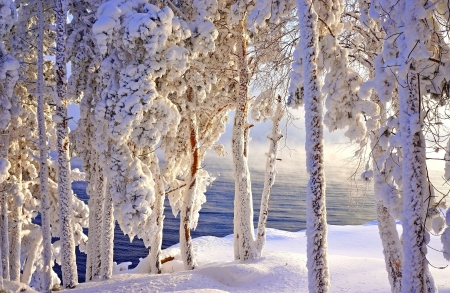 Winter frost - snow, ice, frozen, frost, winter, beautiful, trees