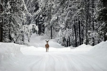 Winter's Beauty - deer, snow, doe, winter, forest, branches, trees