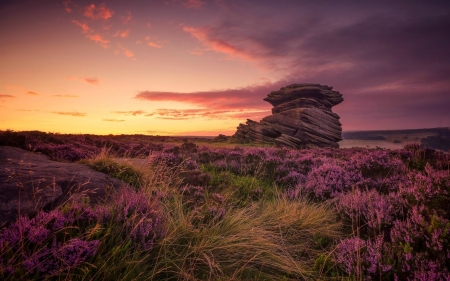 Heather Dawn - rocks, rock formation, dawn, rock, formation, Hathersage moor, sky, clouds, England, Heather, flowers, Mother cap, Derbyshire