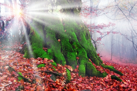 Foliage  Leaves - forest, autumn, leaves, rays, moss, trunk, foliage, Nature