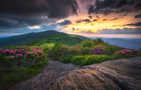 Roan Mountain Highlands - North Carolina, bushes, sun, flowers, Roan Mountain Highlands, clouds, grass, sunset, Mountains, hills, trees