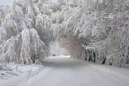 It's Cold Outside - Trees, Cold, Snow, Outside, Winter, Road