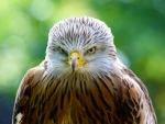 The Eagle is Angry