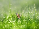 Baby Fox and Dew Drops