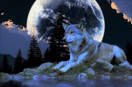 Alone at full moon - alone, moon, wolf, full