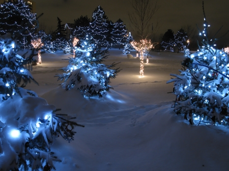 Winter wonderland park - charming, cold, snow, winter, lights, trees, nature, wonderland