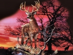 Red Sunset - Deer
