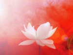 ✿⊱•╮Lotus in Red╭•⊰✿