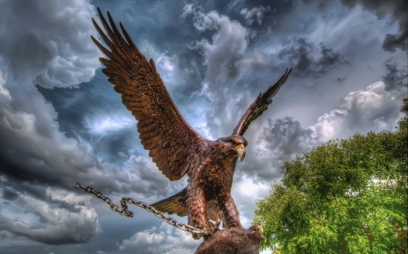 Eagle - Photoshop, Wallpaper, Animals, Birds