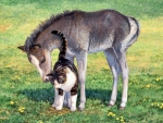 Grey  Baby  Horse And Cat