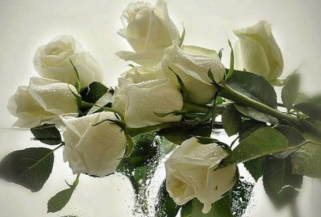 white roses - still life, photography, bouquet, flowers, beauty, roses, white
