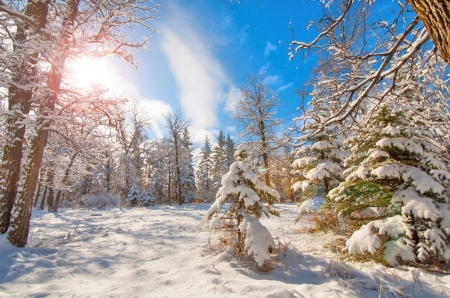 Winter landscape - Forest, Trees, Sky, White, Winter