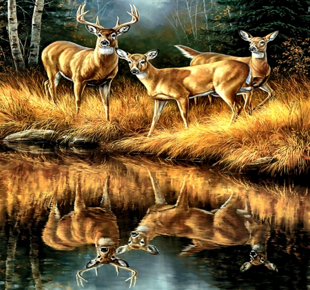 Whitetail Reflections - Deer - art, beautiful, illustration, artwork, deer, animal, painting, wide screen, wildlife, nature