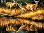 Whitetail Reflections - Deer