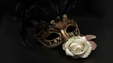 Mask & Rose - rose, Mardi Gra, masquerade, February, white rose, Carnival, fancy, mask, Firefox Persona theme, feathers