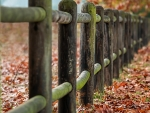 the long Fence