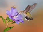 Hummingbird and Bee on Flowers