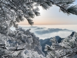 Cloudy Mountainous Landscape of Snowy Trees