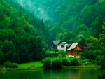 House With Green Forest