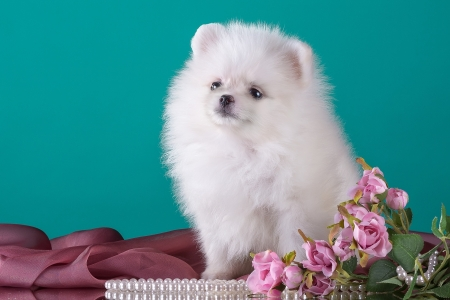 Cute White Puppy Dogs Animals Background Wallpapers On Desktop Nexus Image 2349746