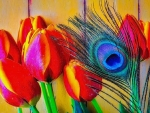 ✿⊱•╮Tulips & Feather╭•⊰✿
