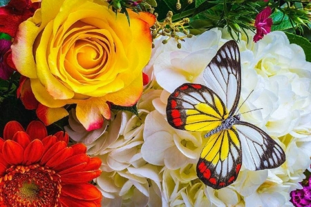 ✿⊱•╮Exotic on Bouquet╭•⊰✿ - lovely still life, bouquet, flowers, love four seasons, nature, spring, butterflies, butterfly designs