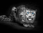 Snow Leopard Abstract