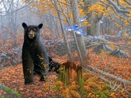 Stonewall Black Bear - fall season, autumn, love four seasons, stonewall, birds, attractions in dreams, leaves, paintings, nature, forests, bears, blue jay, animals