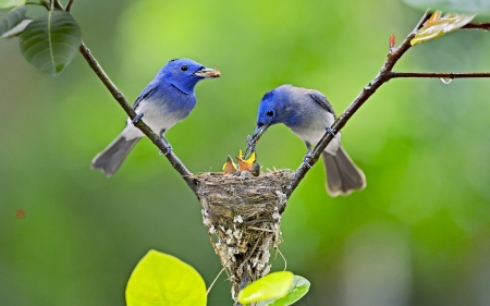 Beautiful birds - Feeding, Pretty, Nest, Birds
