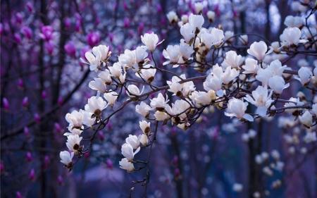 Japanese Garden Wallpaper Iphone